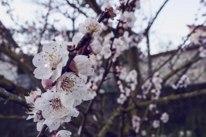 Spring (4)