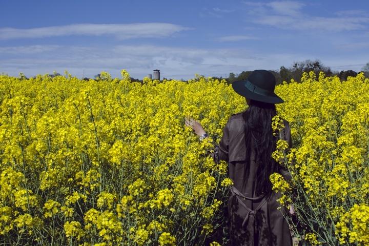 Berada di tengah ladang bunga Colza serasa didalam film India
