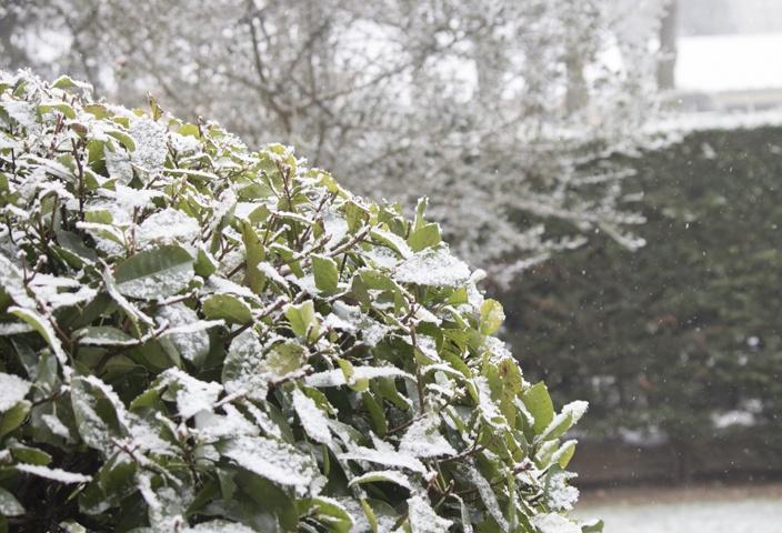 Siputih salju
