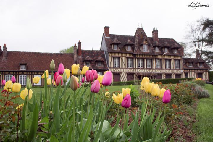 Lyons-la-foret-tulips