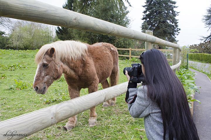 menempuh-perjalanan-ke-rouen-poney